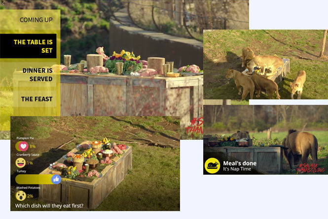 Multiple screenshots from live stream showing picnic before, during and after lions ate