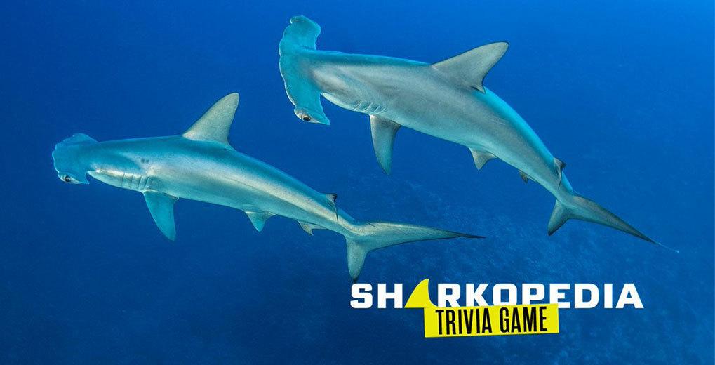 Sharkopedia Trivia Game Promo Image