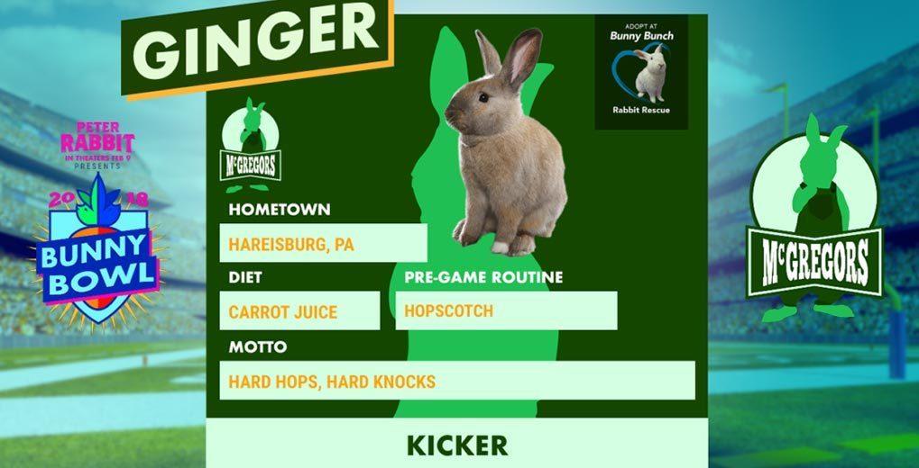 Bunny player profile green team