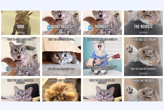 Nala the Cat memes