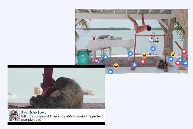 Man hanging upside down from pergola and closeup of Bill the sloth with on-screen question