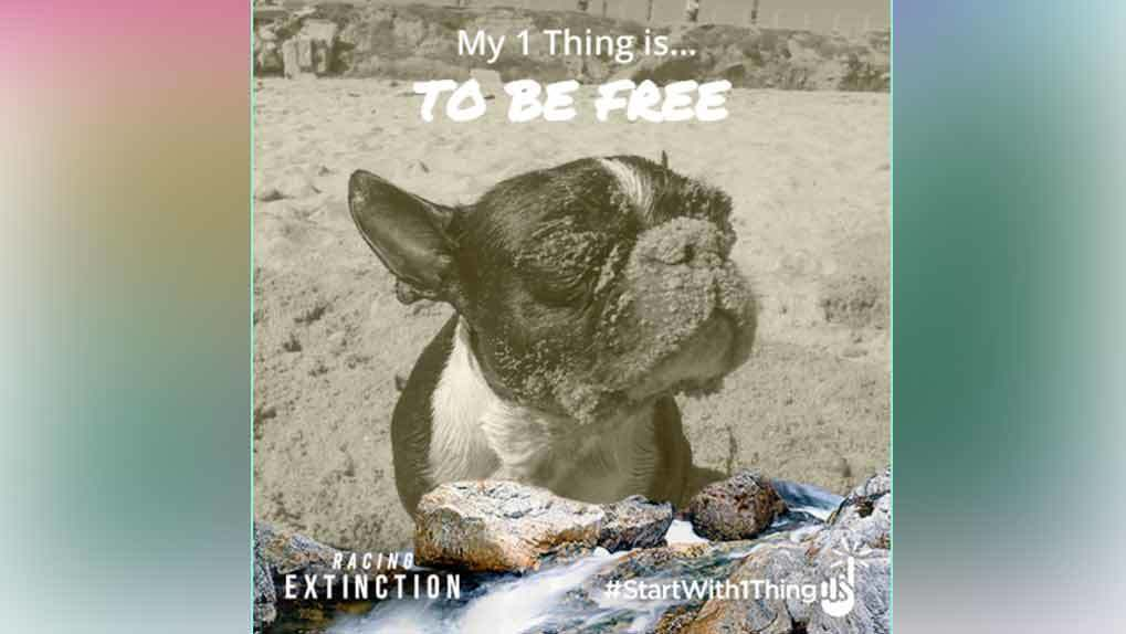 uPic example of a dog that says my one thing is to be free